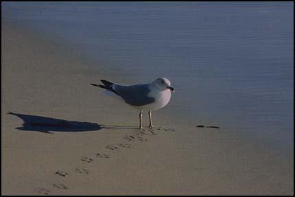 Композиция, чайка на берегу - сдвинутый от центра субъект