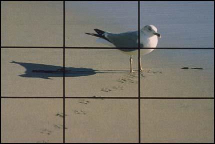 Композиция, правило третей - чайка не берегу