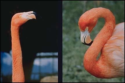 Композиция, баланс - фламинго