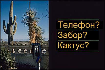 Композиция - телефон, кактус, концентрируем внимание