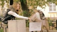 Коза (2010) [Видео]