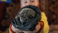 Ёжик (The Hedgehog)