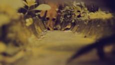 Дворняжка / Pothound (2011)