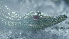 "Cartier ""Odyssey"" (2012) Реклама"