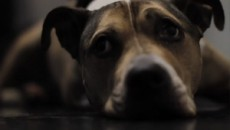 Последние минуты с Оден / Last Minutes with Oden (2010) [Видео]