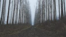 Туман / Fog (2013)
