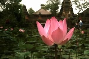 Открытка из Бали / Postcard from Bali